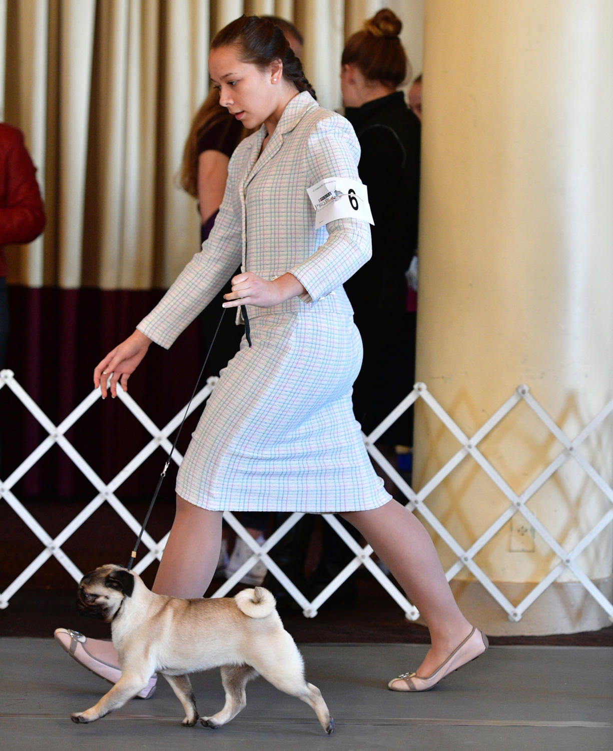 Junior Maddie Buehler shows off her 10-month-old pug, Rumor, to the judges at the preliminary to the Westminster Dog Show.