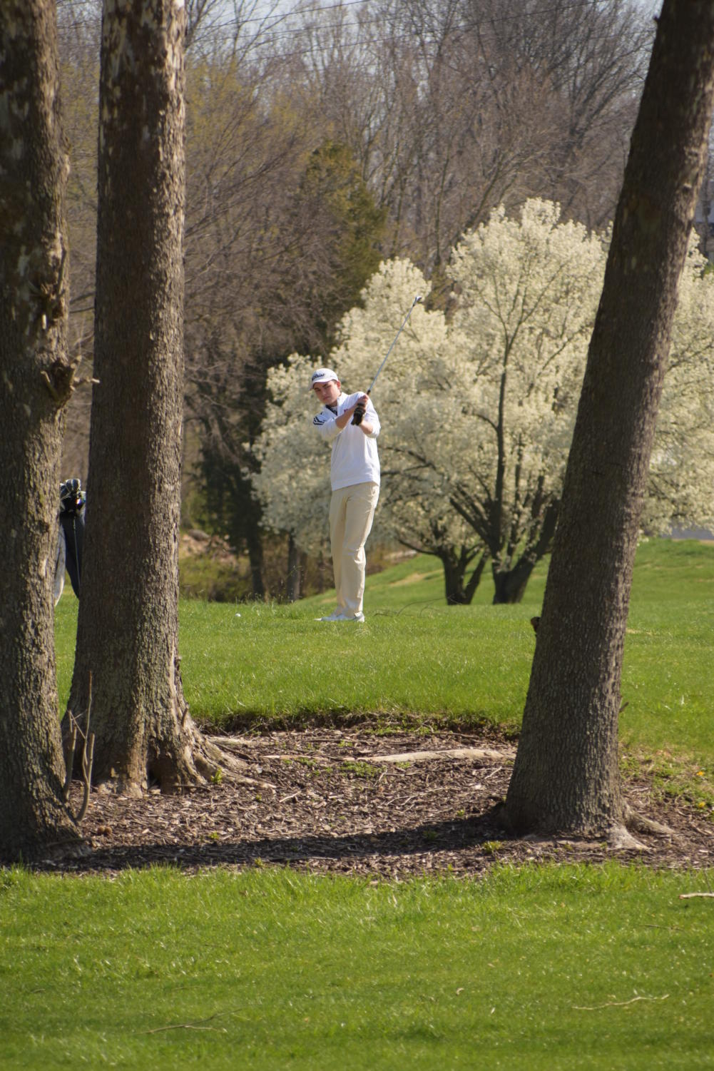 Junior Paul Dannegger tries to hit a shot between two trees.
