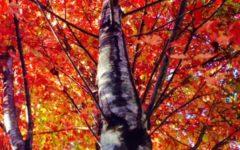 In defense of Fall