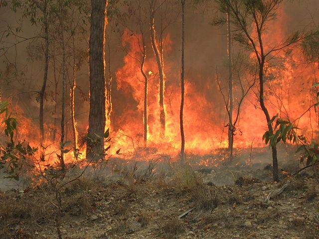 How+Australian+fires+are+hurting+Aboriginal+people